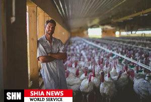مزرعه خانوادگی در کانادا گواهینامه ذبح حلال بوقلمون گرفت