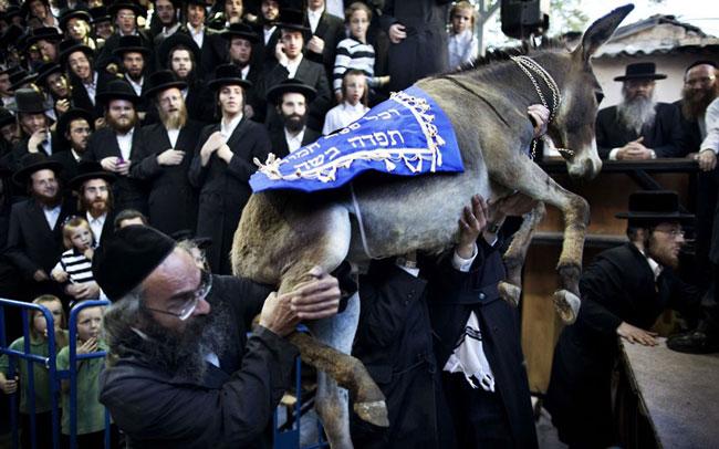 برخی احکام عجیب و غریب یهودیان