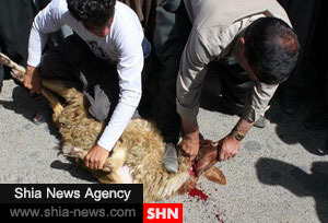 http://www.shia-news.com/files/fa/news/1394/7/1/106410_932.jpg
